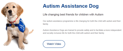 Support Dogs - Autism Assistance