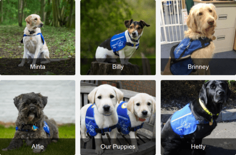 Support Dogs - Sponsor a Dog